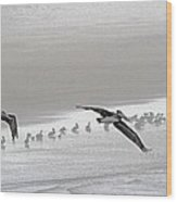 Pelicans Off For A Foggy Day Of Fishing Wood Print