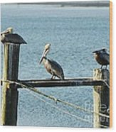 Pelicans On A Break Wood Print by Mel Steinhauer