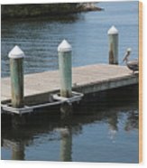 Pelicans On Dock In Florida Wood Print