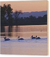 Pelicans On Parade Wood Print