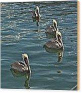 Pelicans On The Water In Key West Wood Print