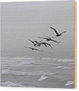 Pelicans With Full Bellies Wood Print