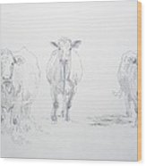 Pencil Drawing Of Three Cows Wood Print