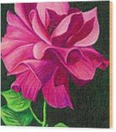 Pencil Rose Wood Print