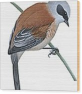 Penduline Tit  Wood Print by Anonymous