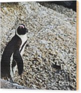 Penguin Chilling On Rock At Boulders Beach Cape Town  Wood Print