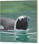 Penguin Gliding On Water's Surface Wood Print