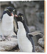 Penguin New Baby Card Wood Print