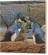 Penguin Talk Wood Print
