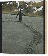 Penguin Travel Poster Wood Print