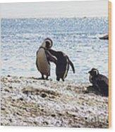 Penguins Kissing At Boulders Beach Cape Town Wood Print