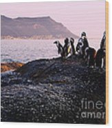 Penguins Mountain Boulders Beach Cape Town Wood Print