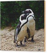 Penguins On Beach At Boulders Beach Cape Town Wood Print