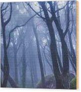 Peninha Magical Forrest In Sintra Portugal Wood Print