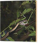 Peninsula Ribbon Snake Wood Print by April Wietrecki Green