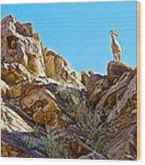 Peninsular Bighorn Sheep From Borrego Palm Canyon Trail In Anza-borrego Desert Sp-ca Wood Print