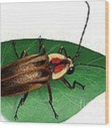 Pennsylvania Firefly Wood Print