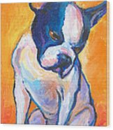 Pensive Boston Terrier Dog  Wood Print