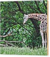 Pensive Giraffe Wood Print
