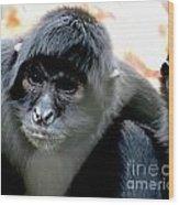 Pensive Monkey Wood Print