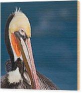 Pensive Pelican Wood Print