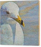 Pensive Seagull Wood Print