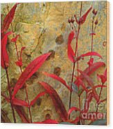 Penstemon And Boulder Wood Print