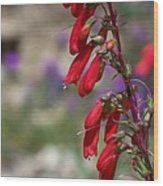 Penstemon Wood Print by Kathy McClure