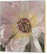 Peonie In Soft Pink Wood Print
