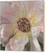 Peonie In Soft Pink Wood Print