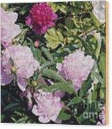 Peonies In Pinks Wood Print