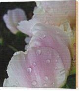 Peony Blossom After A Rain Wood Print