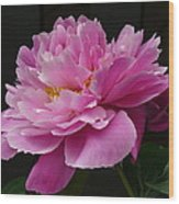 Peony Blossoms Wood Print
