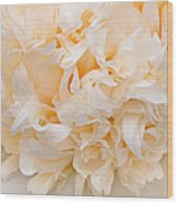 Peony Close-up In Peach Wood Print