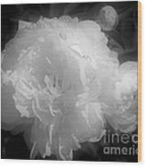 Peony Flower Phases Black And White Contrast Wood Print