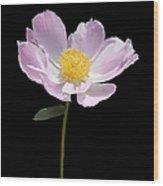 Peony Flower Portrait Wood Print