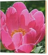 Peony Perfection Wood Print