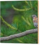 Perched Bluebird Wood Print