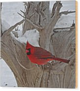 Perched Cardinal Wood Print