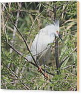 Perched Egret Wood Print