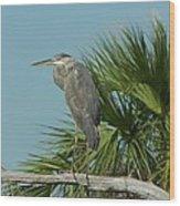 Perched Heron Wood Print