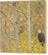 Perched In The Colors Of Autumn Wood Print