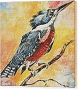 Perched Kingfisher Wood Print