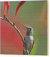 Perched On Crocosmia Wood Print