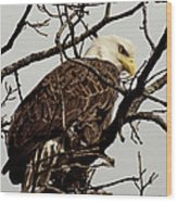 Perched On High Wood Print by Thomas Young