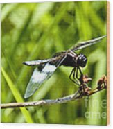 Perched Widow Skimmer Wood Print