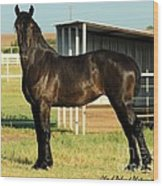 Percheron Filly Yearling Wood Print