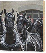 Percheron Horse Team 2008 Wood Print