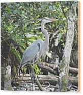 Perching Blue Heron Wood Print