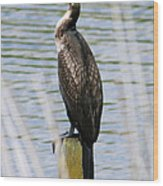 Perching Cormorant Wood Print